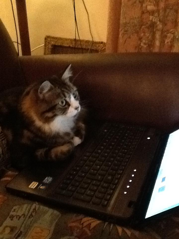 coco laptop